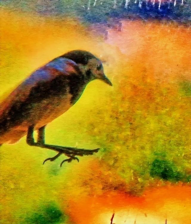 1, photography, digitalart, birds - pierocefaloni   ello