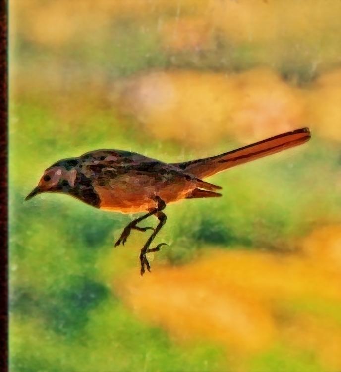 3, photography, digitalart, birds - pierocefaloni | ello