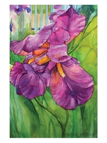 158 / Summer Iris Watercolor - illustration - paige-2875 | ello