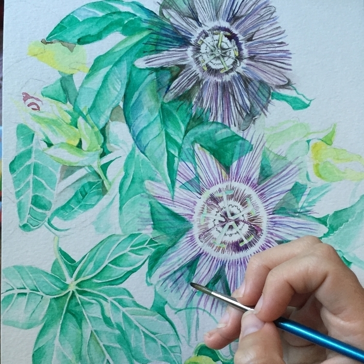 PassionFlower sketching  - watercolor - theaxx | ello