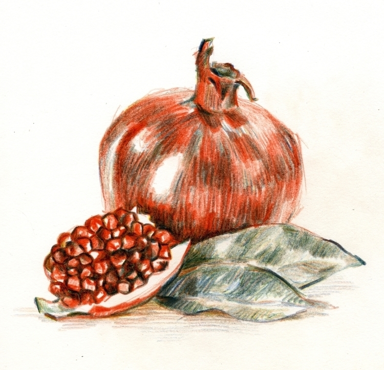 Pomegranate - sketch, pomegranate - prianikn | ello