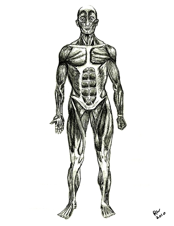 Muscle Man Life Drawing Pencil - wilkinso-5391 | ello
