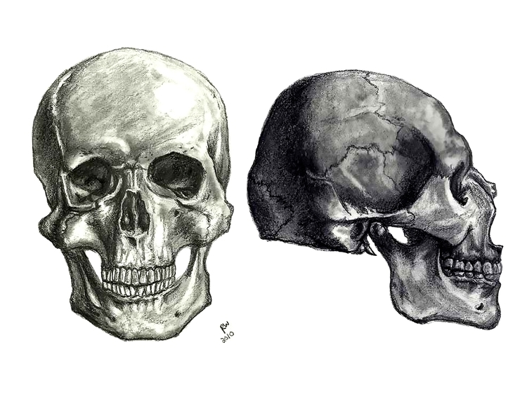 Skulls Life Drawing Pencil - drawing - wilkinso-5391 | ello