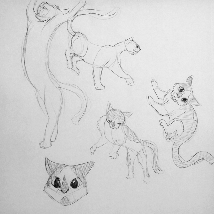 cat studies. bottom cat, Penoo - stephenlarsen | ello