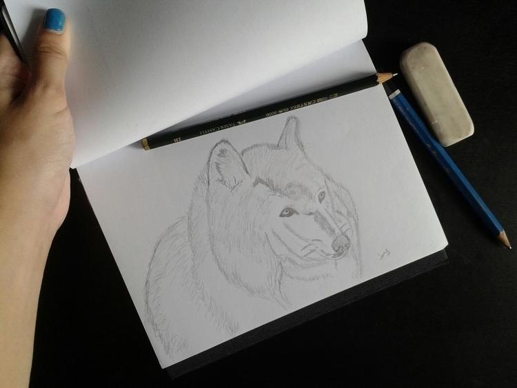 Wolf - wolf, pencil, pencildrawing - jang-4468 | ello