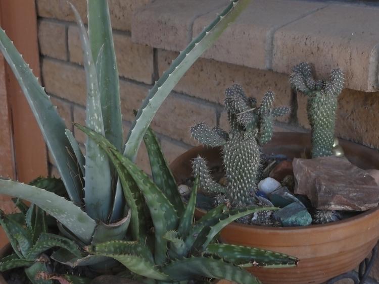 Cactus - photography - lindawilliams   ello
