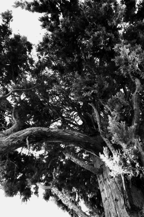 series: trees lines - photography - annieannie-9187   ello