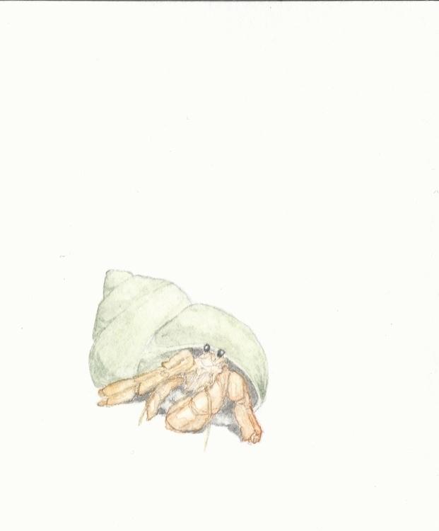 Hermit Crab - watercolor, watercolour - rachelbishop | ello