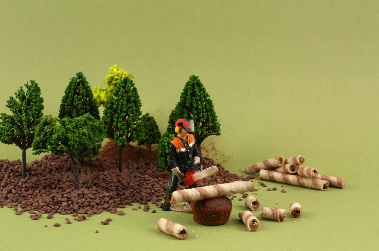 forest, photography, biscuits - iremyesil | ello