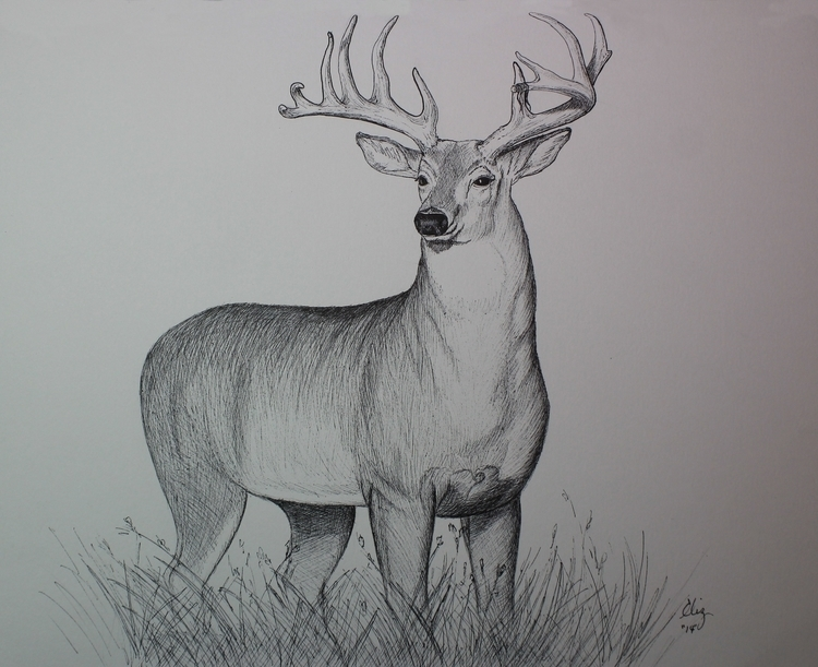 Big Buck - pen Ink - artistinme4ever | ello