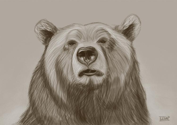 Bear - wildlife, bear - leonbolwerk | ello