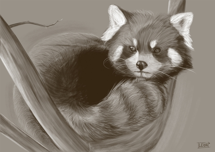 Red panda - wildlife, redpanda - leonbolwerk | ello