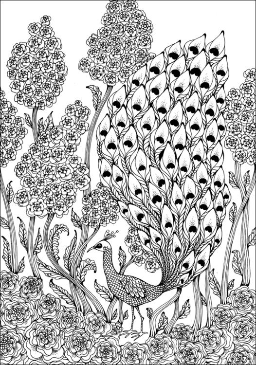 Peacock - peacock, bird - depesha2 | ello