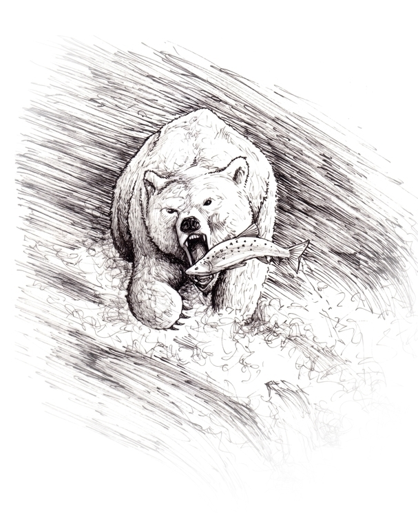 Bear - bear, illustration, drawing - 3zeta | ello