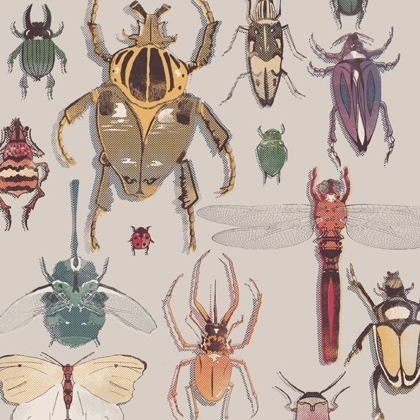 Insects - arthursmith | ello