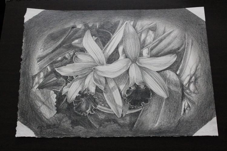 Orchid - miniatures, pencildrawing - vanniegama | ello