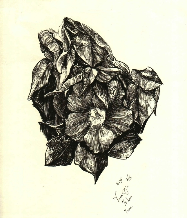 Flower - observationaldrawing, nankin#haching - vanniegama | ello