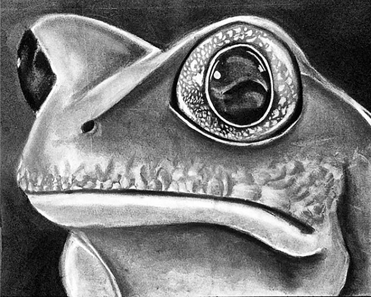 Frog - Charcoal - joshemanuel | ello