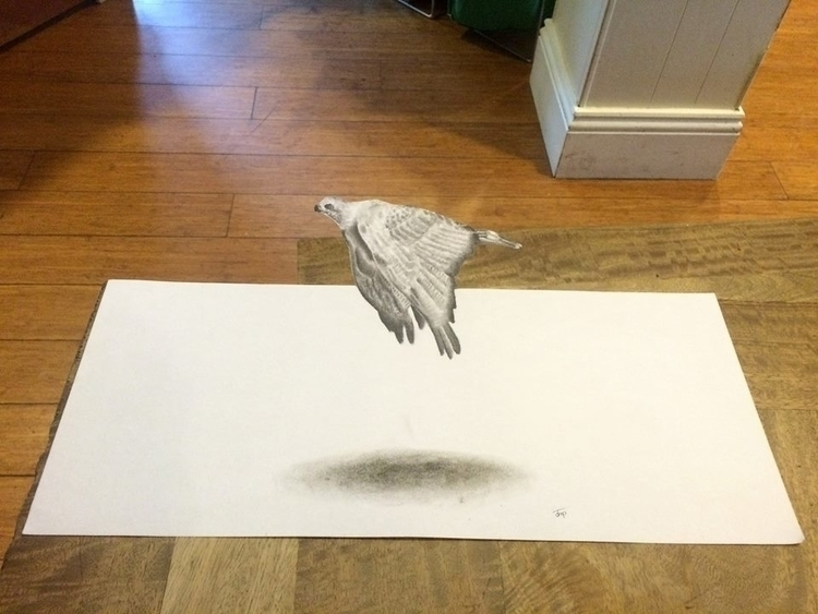 Anamorphic drawing, hawk - anamorphicdrawing - bigfloppybanana | ello