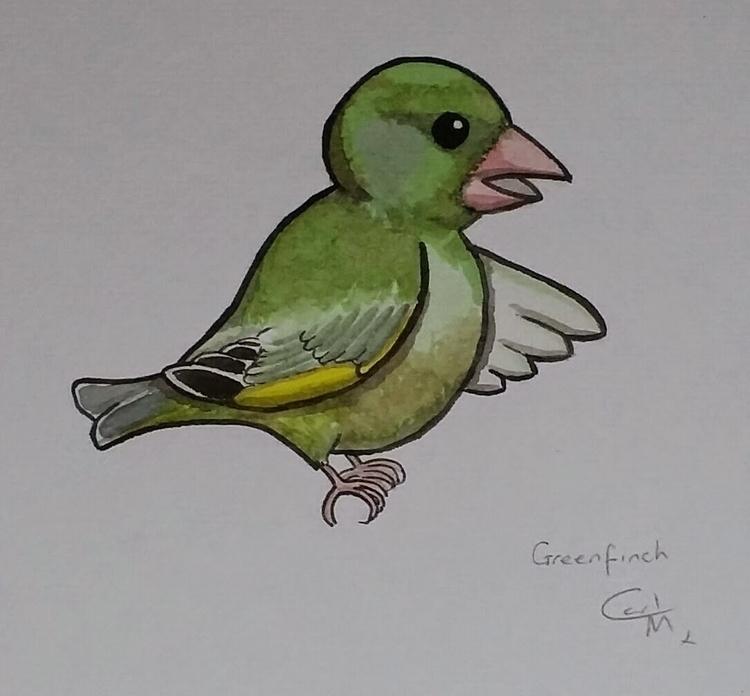 Greenfinch, Birds Lane - birds, wildlife - gbwildlifetales | ello