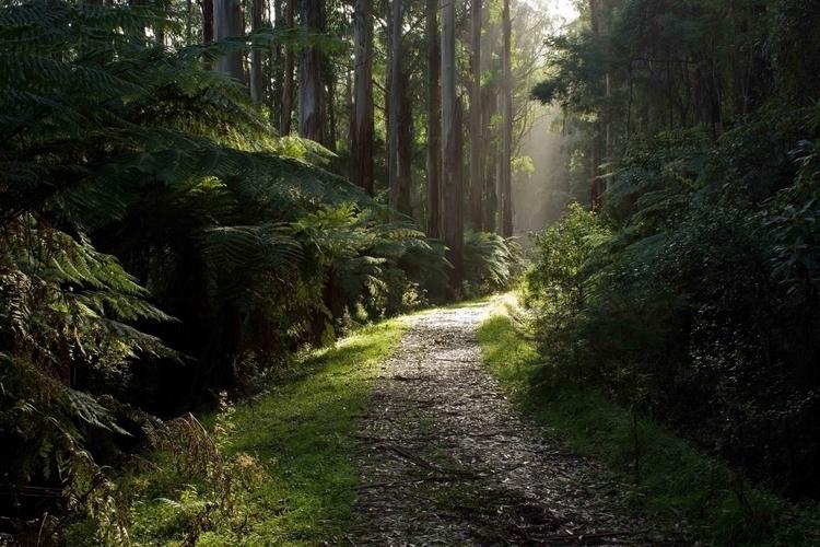 Mysterious Forest - choices Nat - misterpeekaboo | ello