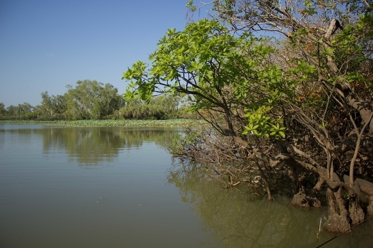 Mangroves!! Boat trip Mary rive - misterpeekaboo | ello