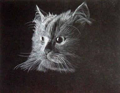 'Cat - drawing - brandyhouse | ello