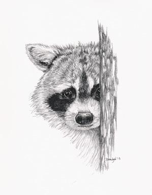'Peeking Raccoon - drawing - brandyhouse | ello
