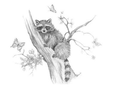 'Raccoon Tree - drawing - brandyhouse   ello