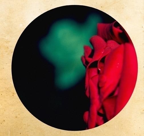 Sleepflower red - jenniferreid-1004 | ello