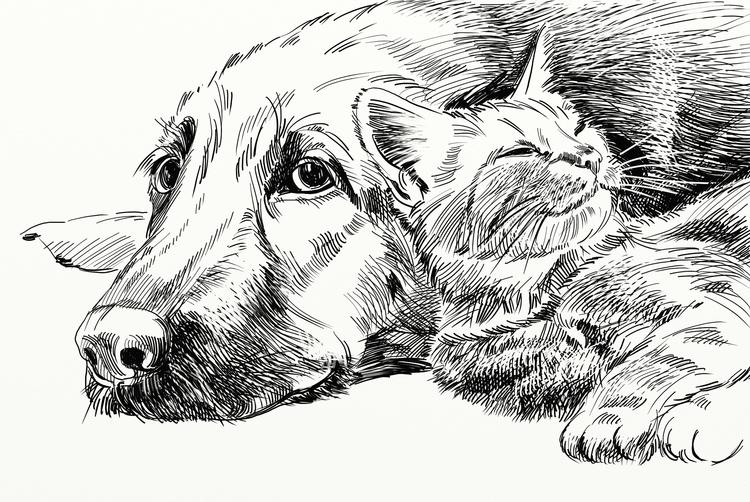dogcat - drawing - usumasinta | ello
