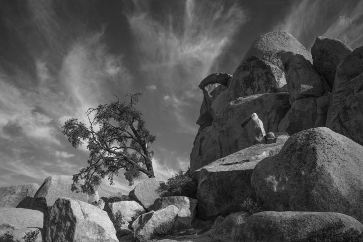 bent tree - photography, joshuatree - frankfosterphotography | ello