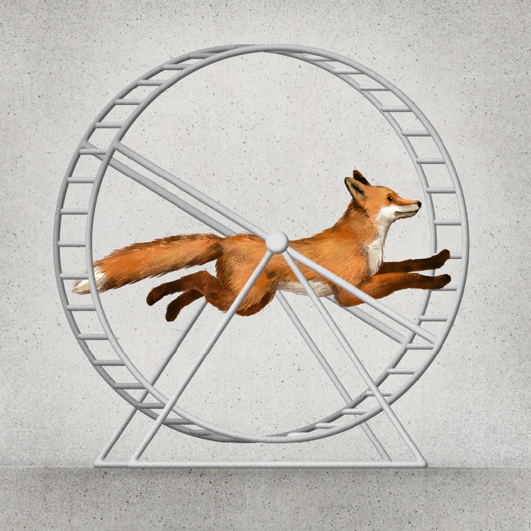 free animal - lithuania, fox, concrete - mildeo | ello