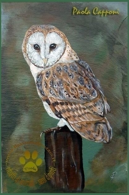 Barn owl - painting, slate, portrait - ilsassonelpozzo | ello
