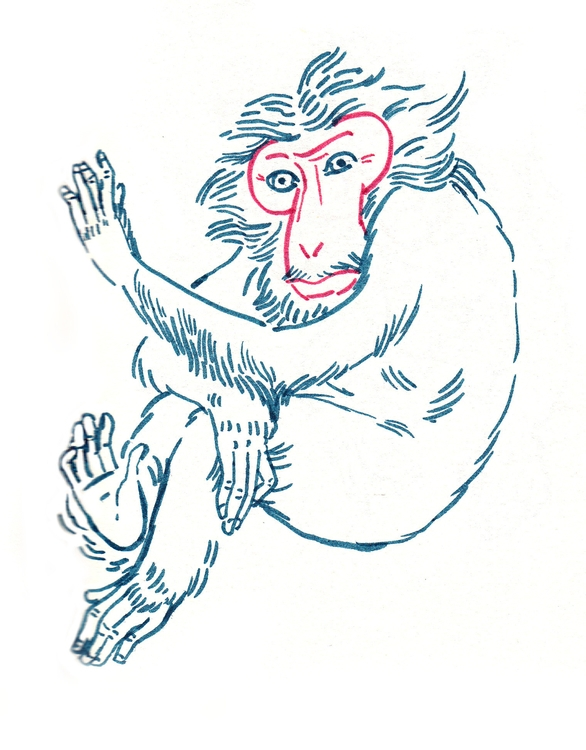 monkey, sketch, drawing, illustration - anelia | ello