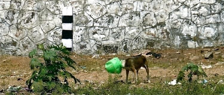 God, Save dog - travel, photography - stefanolazzaro | ello