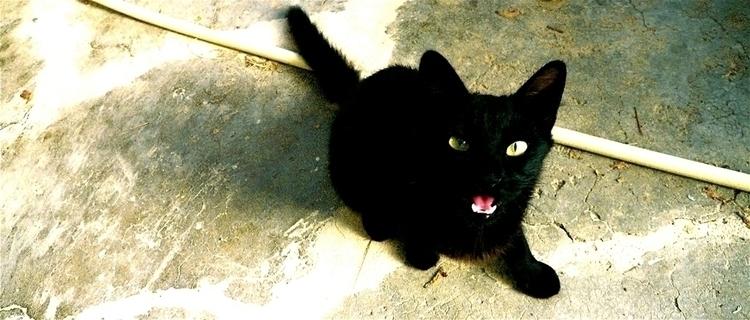 Mad Max - animals, cat, black, madmax - stefanolazzaro | ello