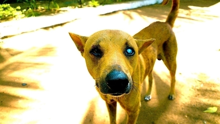 Eyed Chubby - animals, stray, dogs - stefanolazzaro   ello