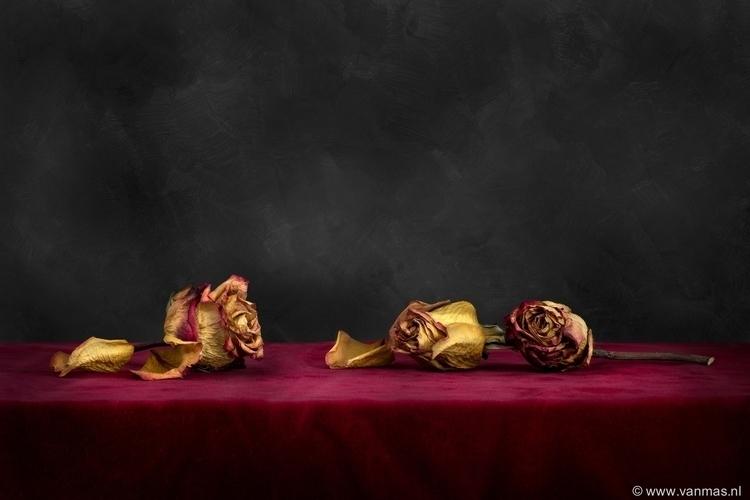 Stilleven met rozen - photography - vanmas | ello