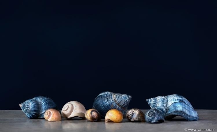 Stilleven met schelpen - photography - vanmas | ello