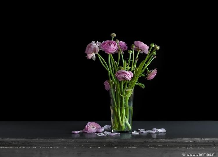 Stilleven met pioenroos - photography - vanmas | ello