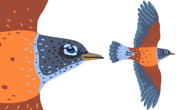 Closeup American Robin Birds Br - austineustice | ello
