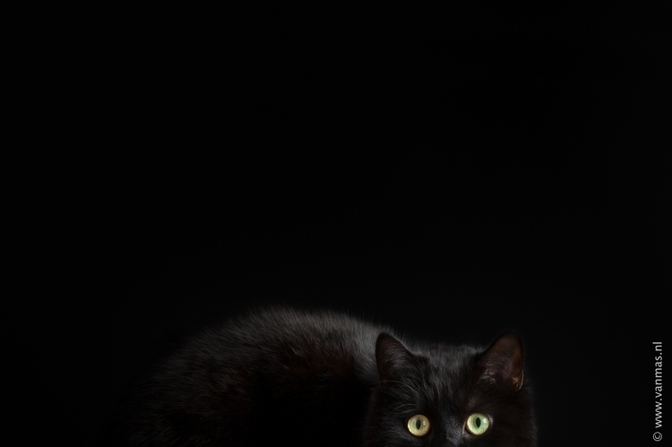 Wat dat - photography, animals, cat - vanmas | ello