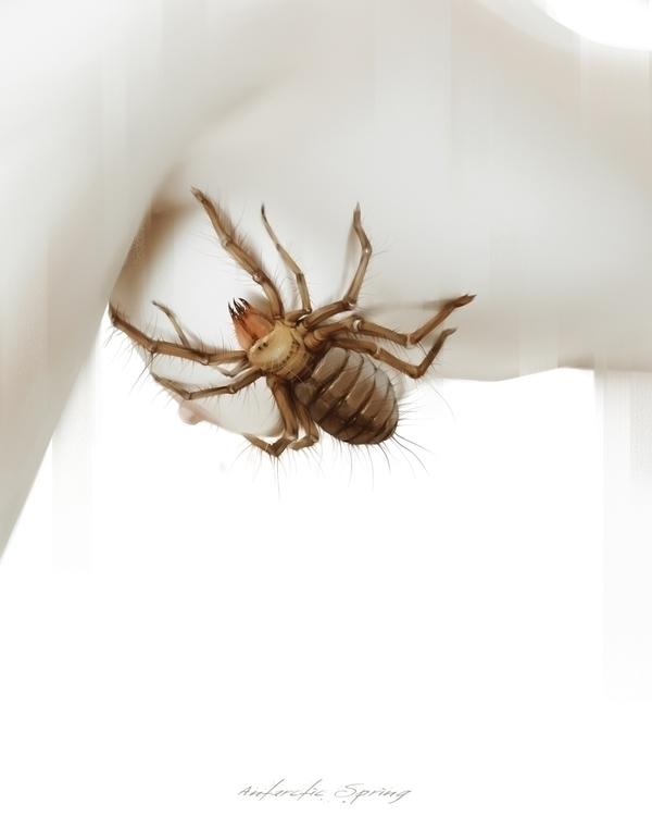 Model: Camel Spider (Solifugae - antarcticspring | ello