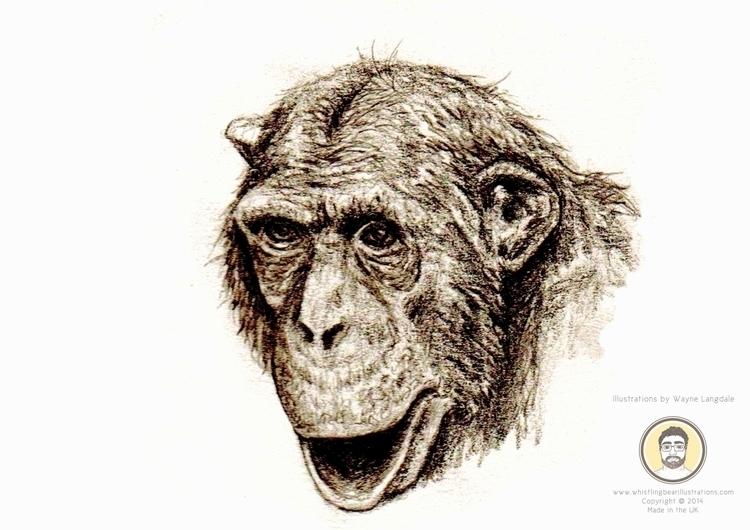 Pencil Drawing Chimp - chimp, chimpanzee - whistlingbear | ello