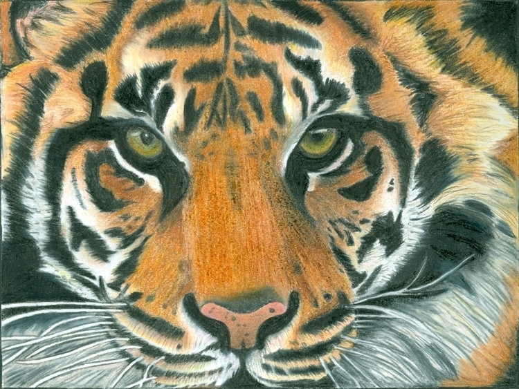 Colored Pencil - drawing, coloredpencil - casstheartist | ello