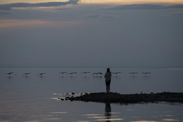 birds, photographer - bombaybeach - frankfosterphotography | ello
