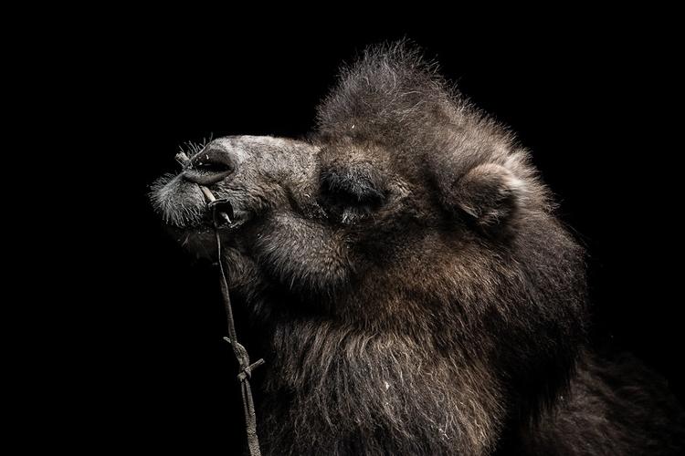 Tuïe - mongol, mongolia, black, portrait - remichapeaublanc | ello