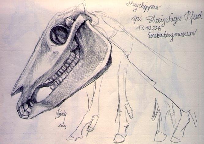 drawing, pencil, pencildrawing - saralutra-9852   ello