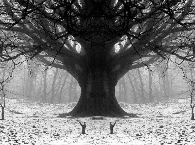 Treeking - trees, multipleexposure - bencain | ello